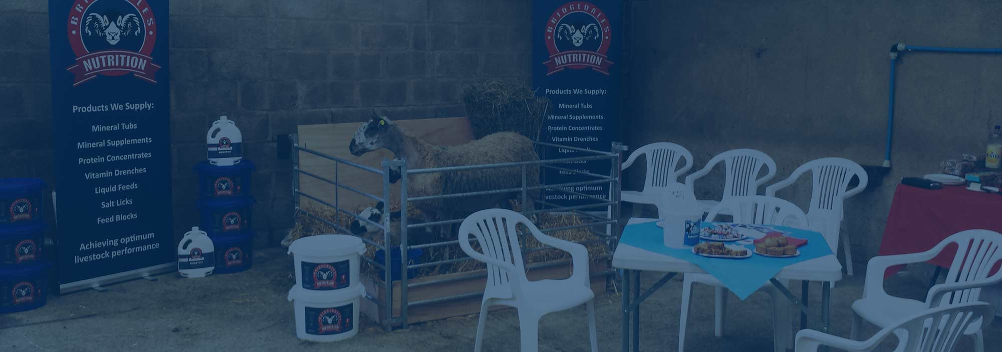 Bridgedales Nutrition Ltd at the Northern Sheep event